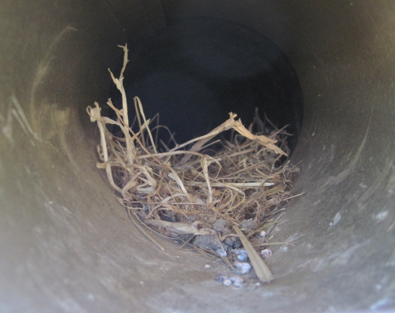 bird nest removal from dryer vent