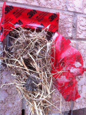 Removing Birds Nest From Dryer Vent Dryer Vent Cleaner
