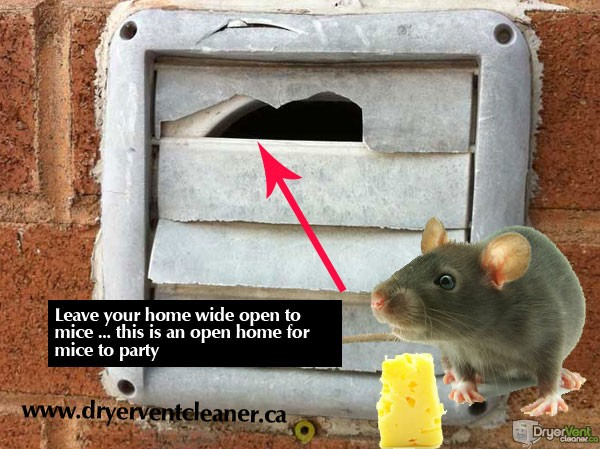 prevent mice from using your dryer vent as a way into your home