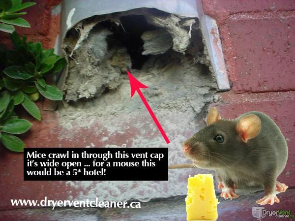 mice in dryer vent