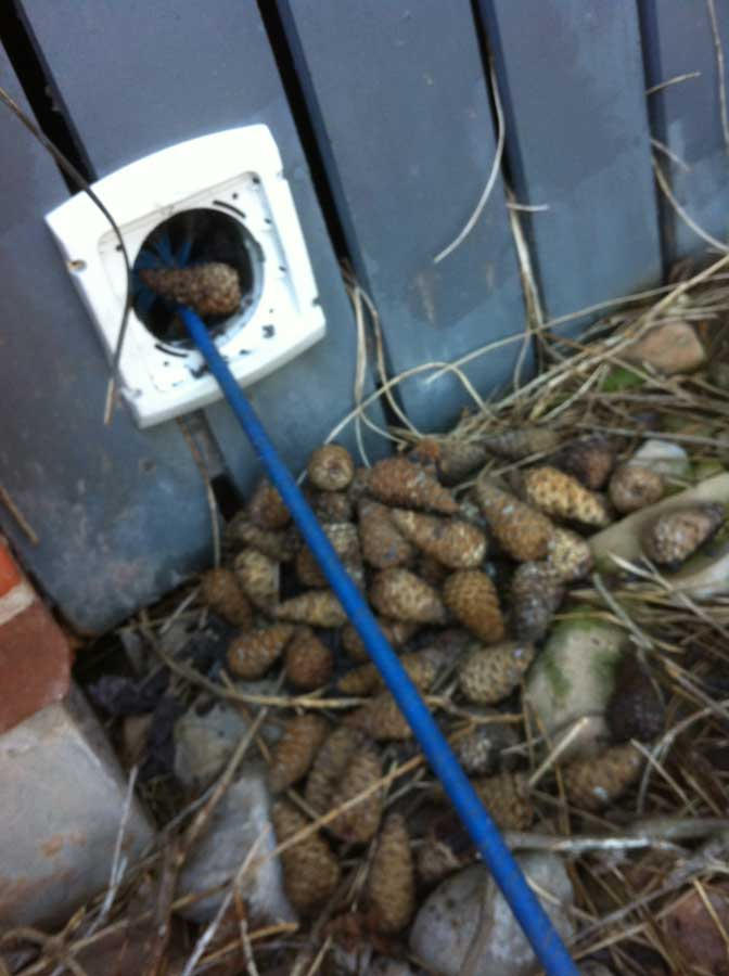 dryer vent clogged by 117 pine cones stashed by squirrels
